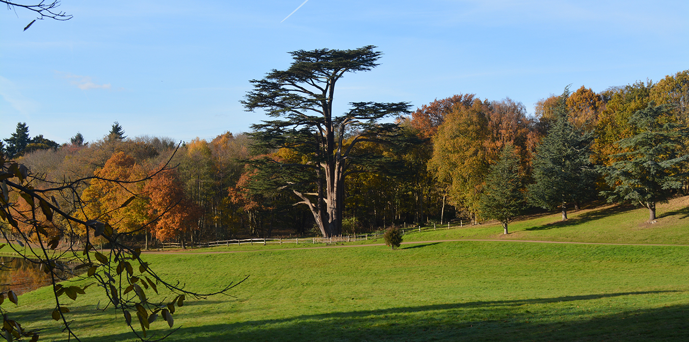 Head Gardener Andy Mills chooses his five favourite Painshill trees