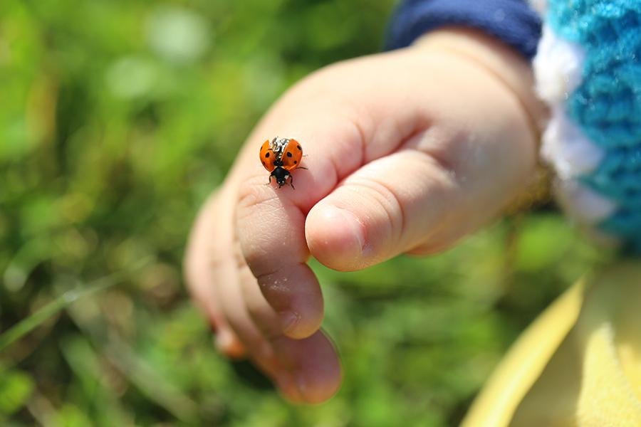 Early Years outdoor learning minibeast safari