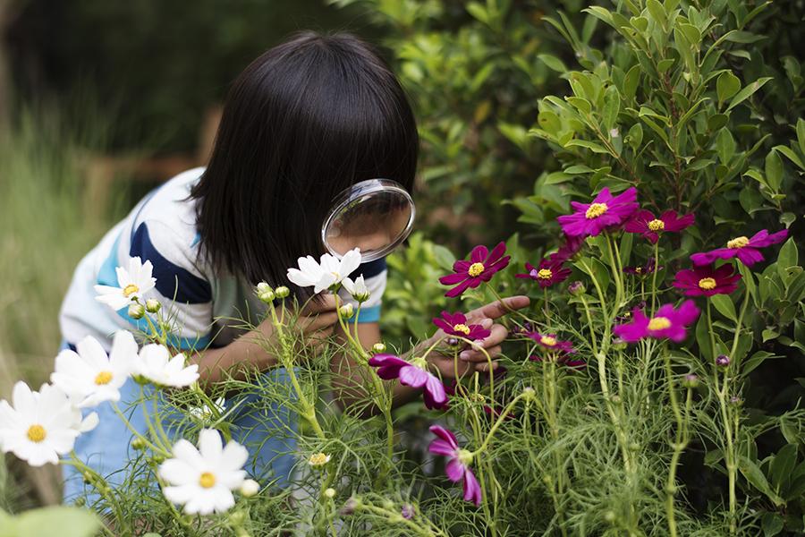 plant explorer