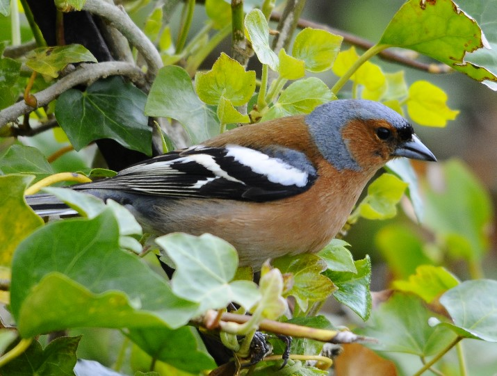 Painshill Bird Song Walk